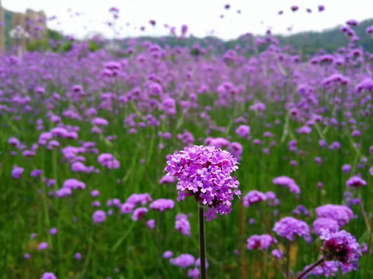百啭千声随意转,山花红紫树